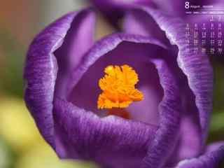 2018年8月日历壁纸高清唯美紫色花朵护眼壁纸