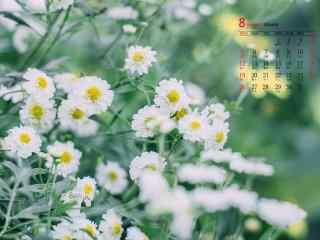2018年8月日历壁纸清新唯美花朵护眼壁纸