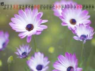 2018年8月日历壁纸清新紫色花卉护眼壁纸