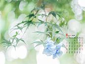 2018年8月日历壁纸清新淡蓝色花卉护眼壁纸