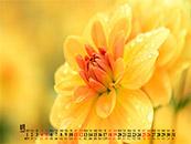 2018年8月日历壁纸优雅黄色花卉护眼壁纸