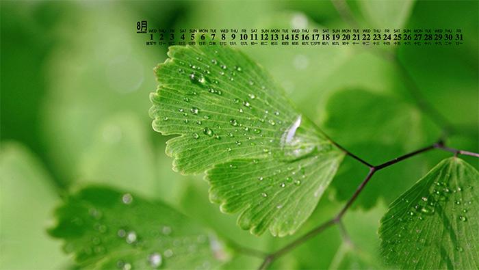 2018年8月日历壁纸绿色嫩叶植物护眼壁纸