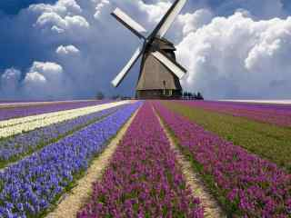 荷兰自然唯美花园风车风景桌面壁纸
