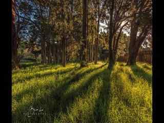 新西兰唯美树林倒