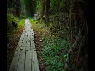 暗调树林石板幽静