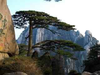 黄山国家地质公园迎客松树风景电脑壁纸