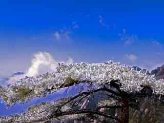 黄山雾凇自然美景桌面壁纸
