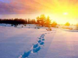 唯美雪景桌面壁纸:落日下的等待