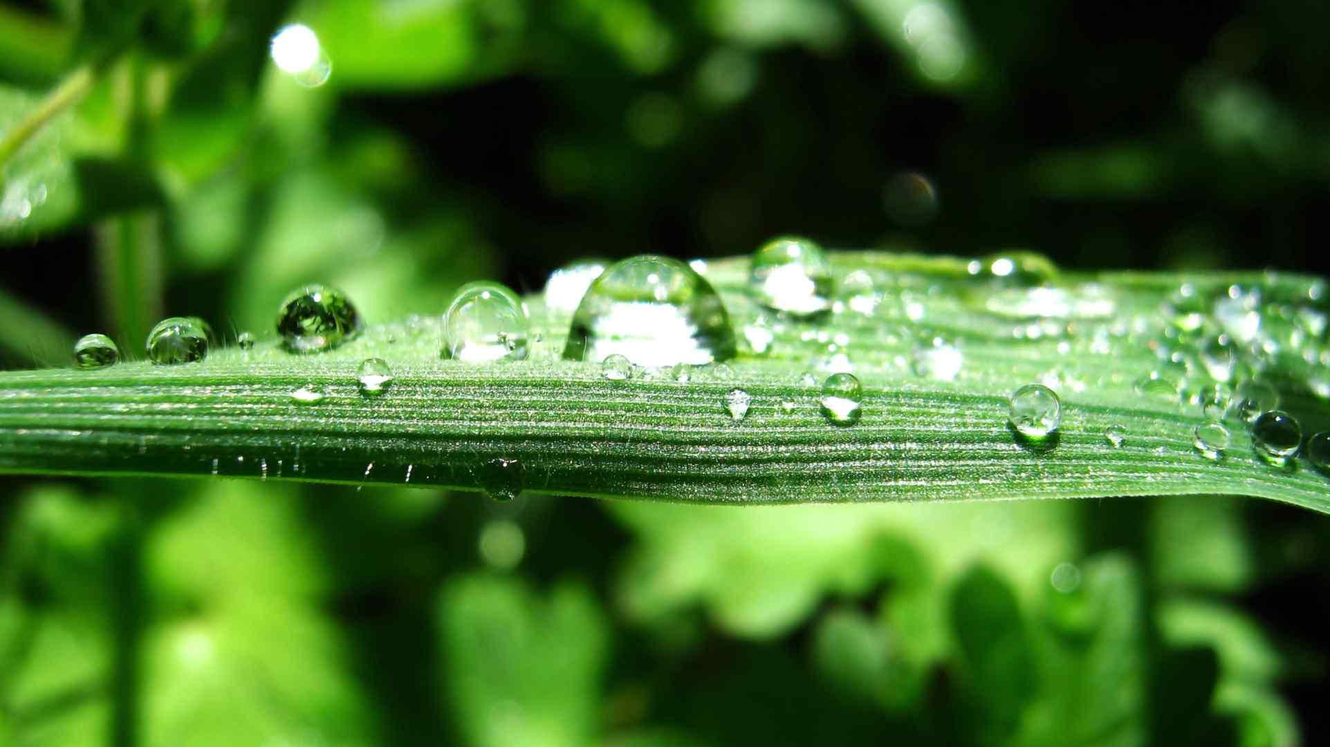 绿叶上的露珠高清