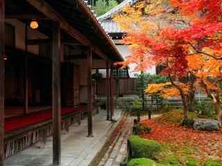 日本庭院观秋火红
