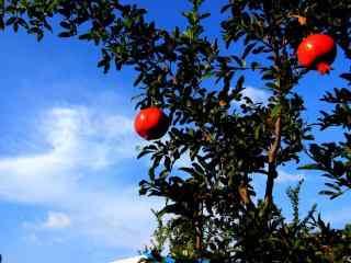 秋日瓜果丰收之石榴水果高清桌面壁纸