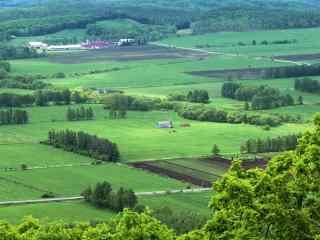夏季绿色田园北海道风光桌面壁纸