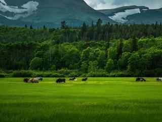 精选绿色草原自然