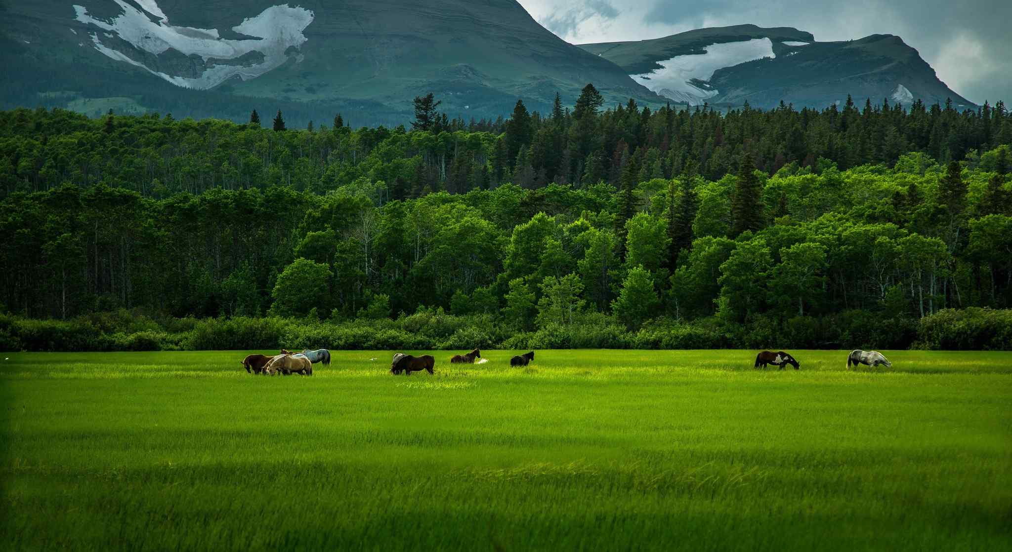 内蒙古大草原野马高清桌面壁纸
