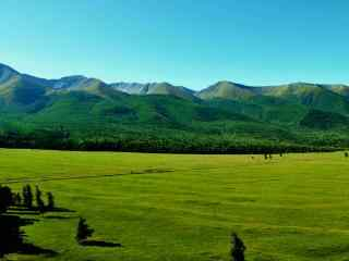 生机勃勃的大草原