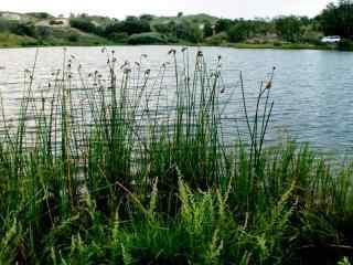 草原水草风景图片高清桌面壁纸