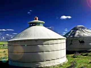 日照草原白色蒙古