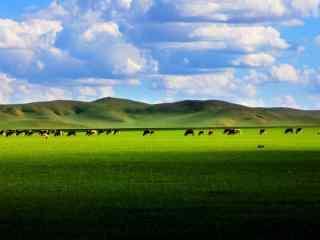 美丽的蒙古草原风