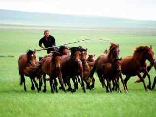 草原蒙古汉子赶马