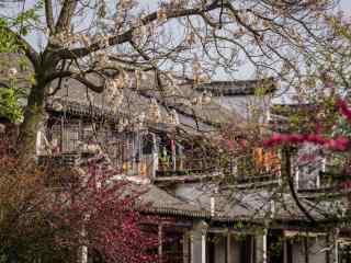 文艺南浔古镇之春日花满枝头风景壁纸