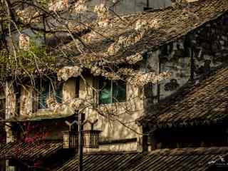 春日里的南浔梨花满枝头风景壁纸