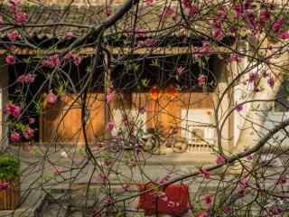 南浔古镇的春日桃花风景壁纸
