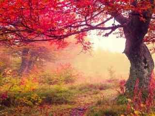 秋天红枫高清风景电脑桌面壁纸第三辑