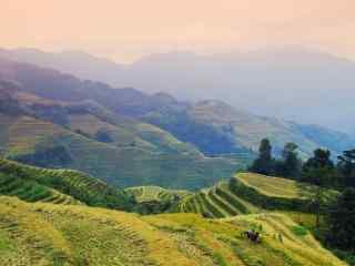 暖色调秋天的桂林丰收的梯田风景壁纸