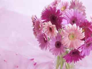 清新可爱的花卉图