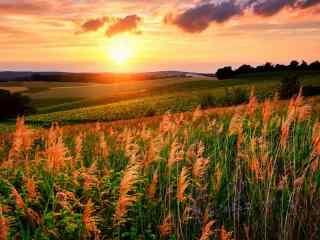 静谧美好的田园夕阳风光高清电脑壁纸