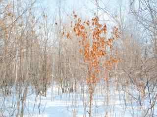 长白山银装素裹的树木风景壁纸图片