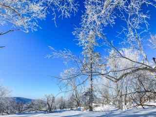 长白山银装素裹的树木桌面壁纸
