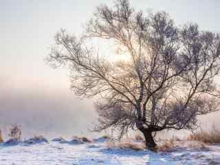 银装素裹的长白山树木桌面壁纸