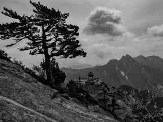黑白华山松树风景桌面壁纸