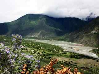 雅鲁藏布江沿岸花开风景图片壁纸