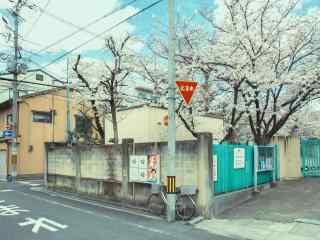 樱花街角的单车桌面壁纸