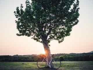 大树旁的单车桌面壁纸