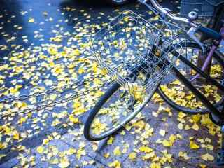 自行车和银杏落叶桌面壁纸