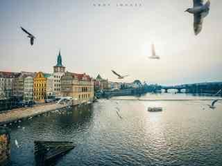 布拉格城市河畔海鸟风景桌面壁纸
