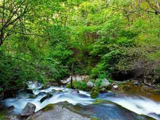 太白山红河谷绿色风景桌面壁纸图片下载