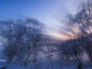 安静的森林雪景桌面壁纸