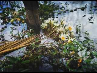 漂在水面的小花吴哥风景壁纸电脑桌面