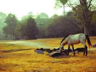 吴哥自然风景和骏马桌面壁纸图片