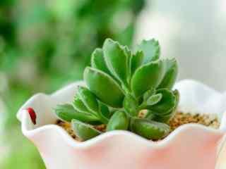 清新唯美花卉植物