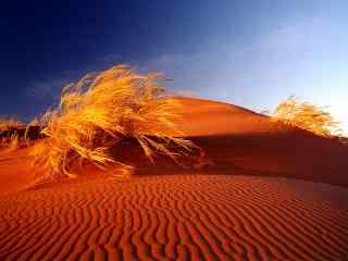 暖色调沙漠风景桌面壁纸