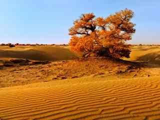 唯美的沙漠风景壁纸
