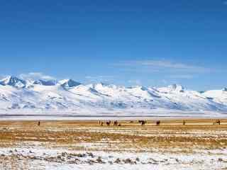 天山雪山草地自然风景图片桌面壁纸
