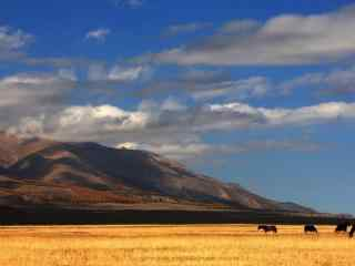 天山风吹草地唯美自然风景桌面壁纸