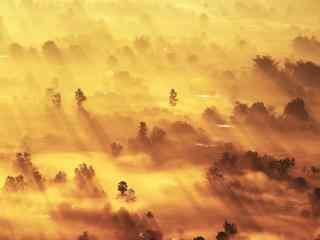 阳光洒在晨雾上金色唯美桌面壁纸