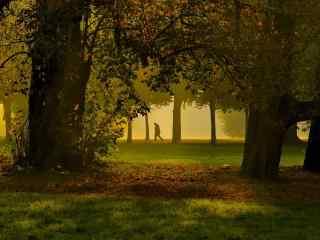 唯美的林间小路风
